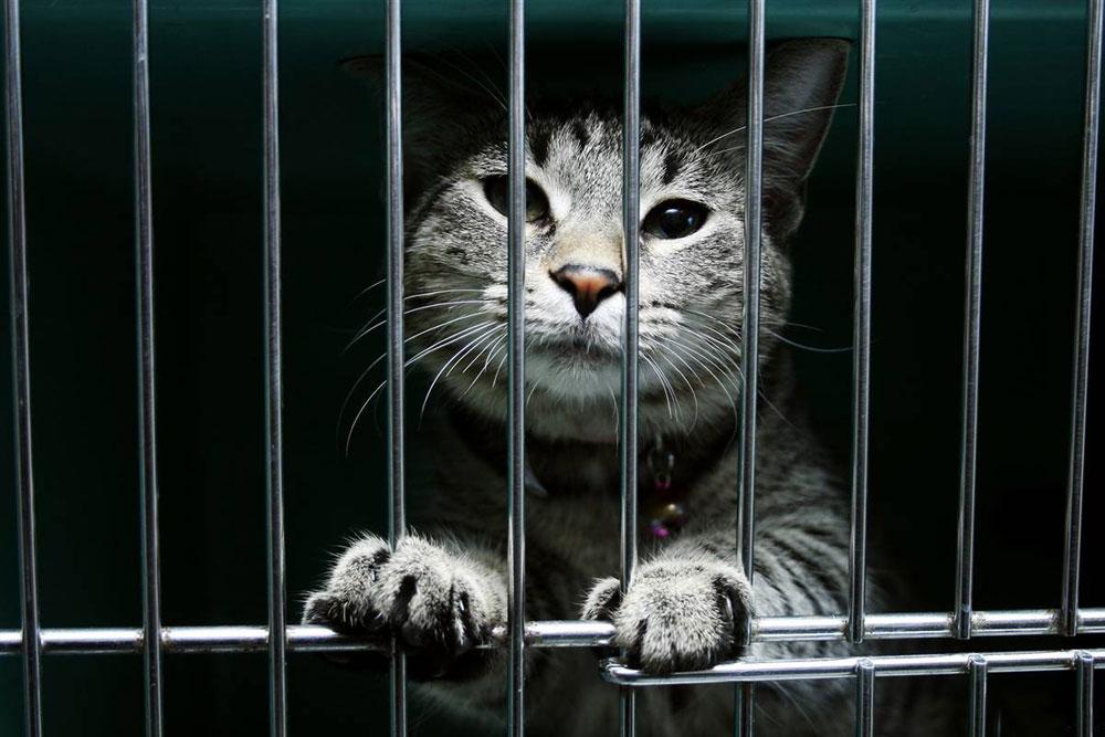 7 gatos que foram responsabilizados por crimes