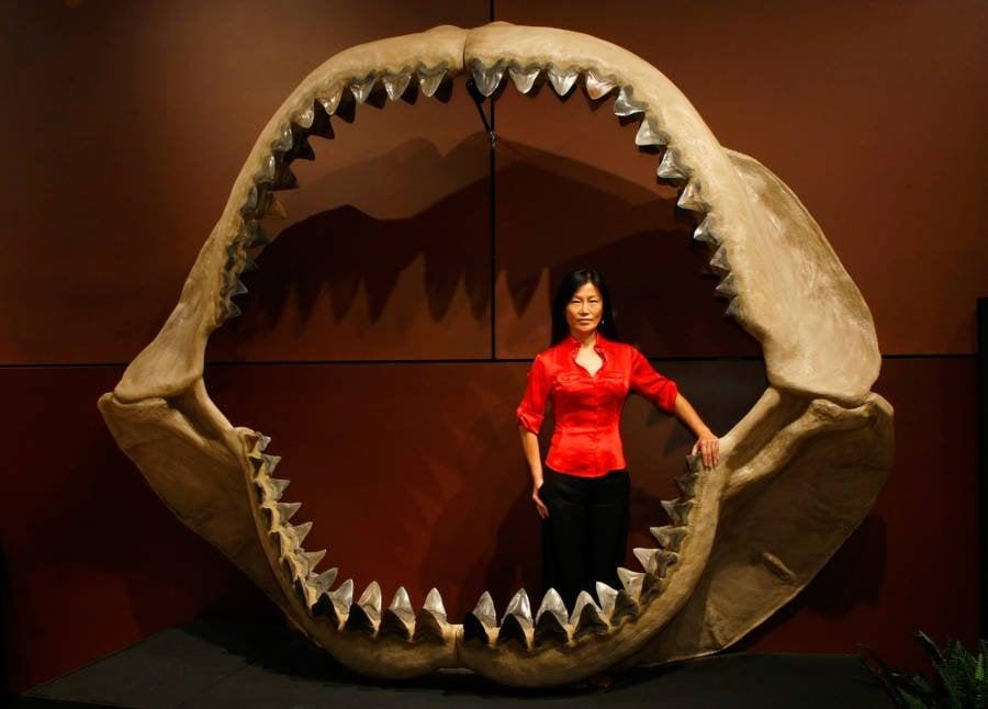 Como o megalodon foi extinto mesmo sendo o maior predador do mar que já existiu?