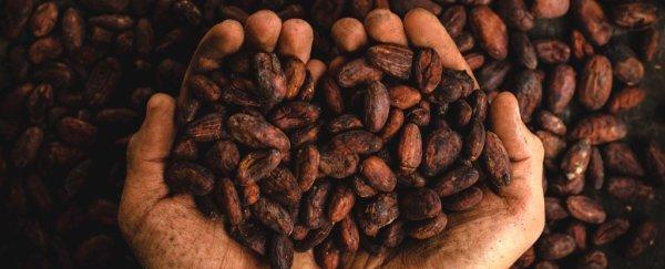 879 Chocolate Theobroma Cacao 0 1024 600x243, Fatos Desconhecidos