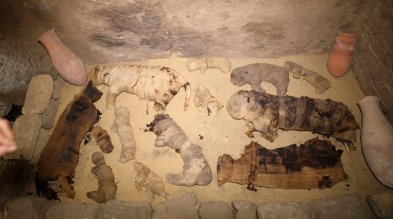 Dezenas de gatos mumificados foram encontrados no Egito