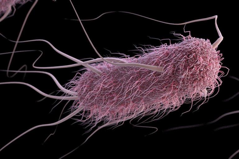 7 agentes patogênicos que comem carne humana
