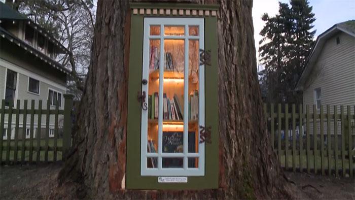 Mulher transforma árvore velha em uma linda biblioteca totalmente de graça