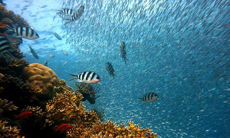 Entenda porque o oxigênio nos oceanos está acabando e o quanto isso é perigoso