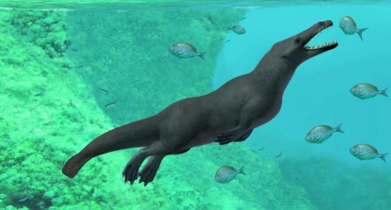 Fóssil de 'baleia' com 4 patas foi encontrado no Peru