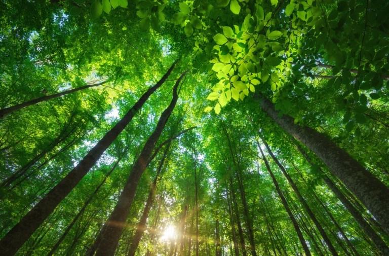 8 vezes em que a natureza prejudicou o ser humano