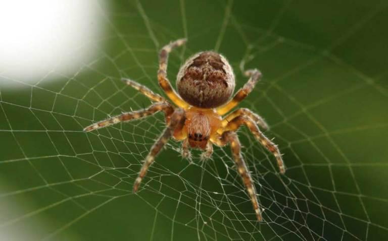 7 coisas mais estranhas e misteriosas envolvendo aranhas