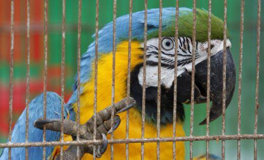 7 animais mais traficados do planeta