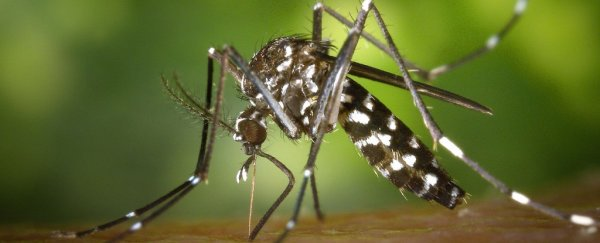 Em dois anos, cientistas eliminam mosquito transmissor da dengue de duas ilhas na China