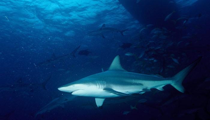 Homem encontra dente de tubarão no pé 25 anos depois de encontro com o animal