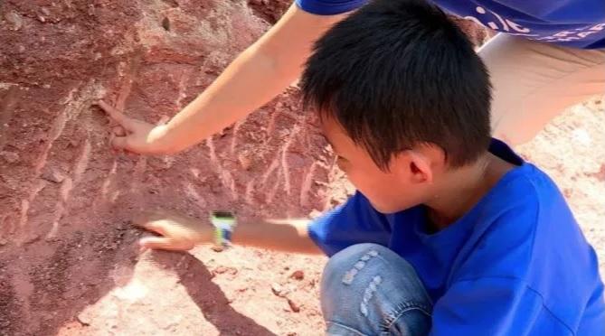Garoto encontrou 11 ovos de dinossauros enquanto brincava
