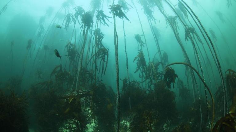 Conheça as florestas submersas que atraem turistas na África do Sul