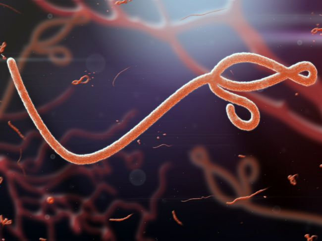 Entenda Porque O Japao Encomendou O Virus Ebola 2, Fatos Desconhecidos