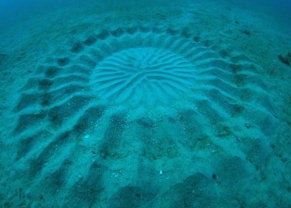 O Que Sao Esses Circulos Misteriosos Encontrados No Fundo Do Mar 1, Fatos Desconhecidos