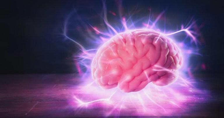 Quanto tempo um cérebro pode ficar vivo sem o corpo?
