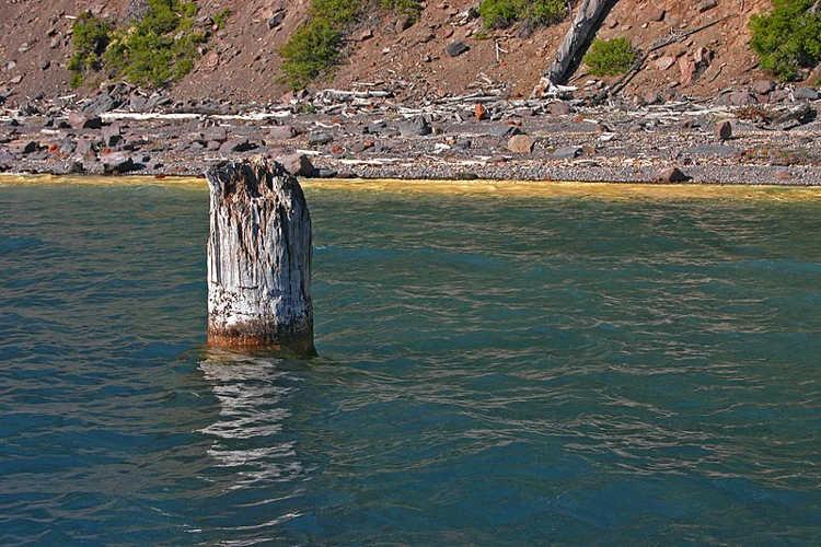 O tronco de árvore que se recusa a afundar há 120 anos