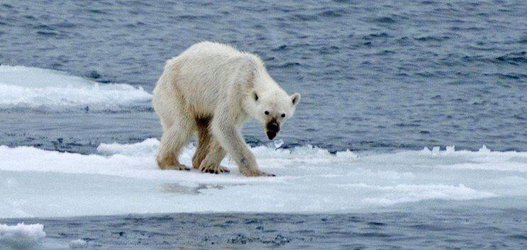 7 espécies de animais que o mundo perdeu nessa década