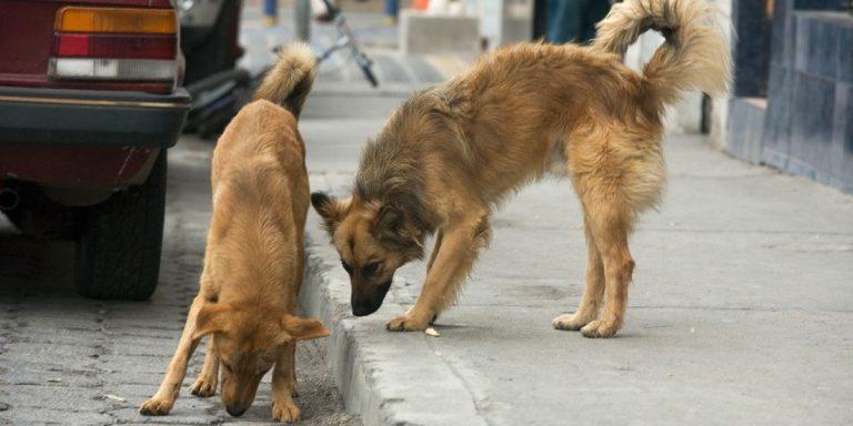 Veja o momento em que dupla de cães salva mulher de assaltante armado