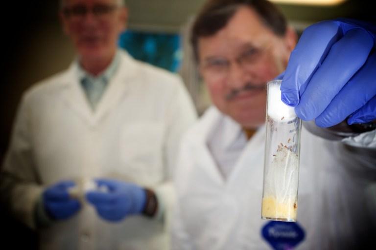 Pesquisadores vão usar as células-tronco para ressuscitar as pessoas