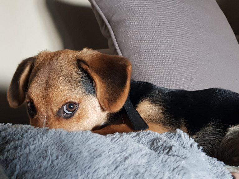 8 maiores medos dos cachorros