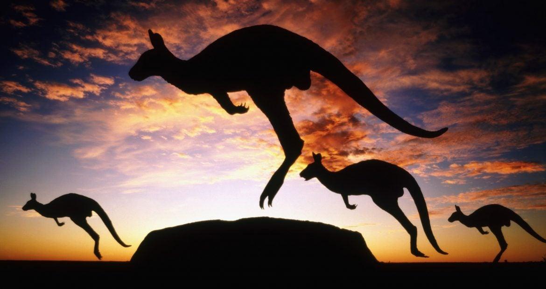 Descubra se esses animais bizarros são do Brasil ou da Austrália [Quiz]