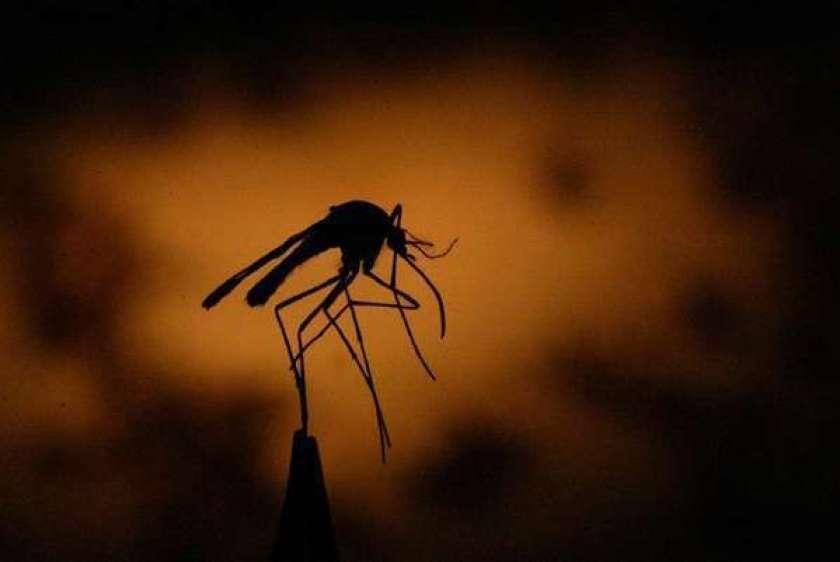 A história do homem que alega que seus gases matam mosquitos há 6 metros de distância