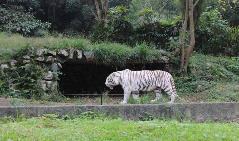 7 idas mais horripilantes ao zoológico