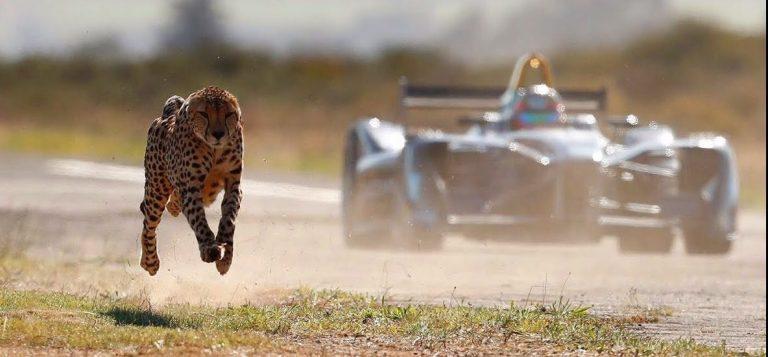 7 espécies velozes mais assustadoras do mundo