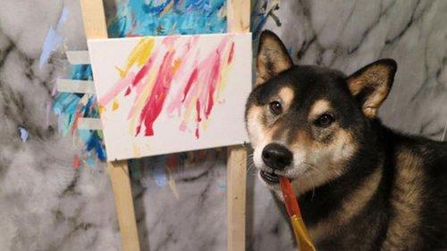 Cão aprende a pintar e se torna viral nas redes sociais
