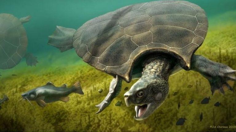 Tartaruga do tamanho de um carro viveu na Amazônia