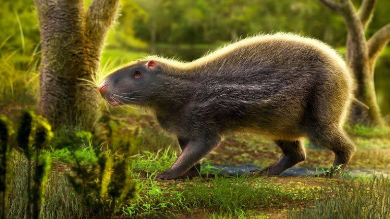 O que existia no Acre há 10 milhões de anos?