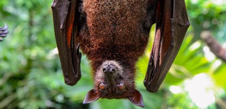 Peru toma medida extrema e começa a matar morcegos por medo do novo coronavírus