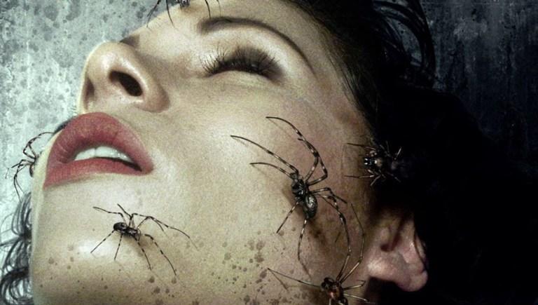 Se todas as aranhas do planeta cooperassem, elas comeriam todos os humanos em apenas um ano