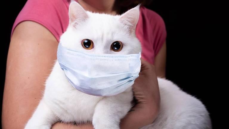 Conheça o caso do gato que pode ter contraído o Covid-19 do seu dono