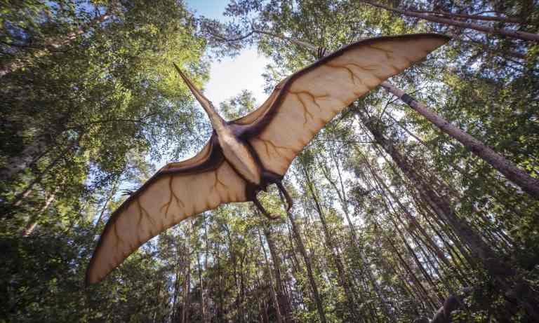 Dinossauros podem oferecer soluções para problemas de aeronaves atuais