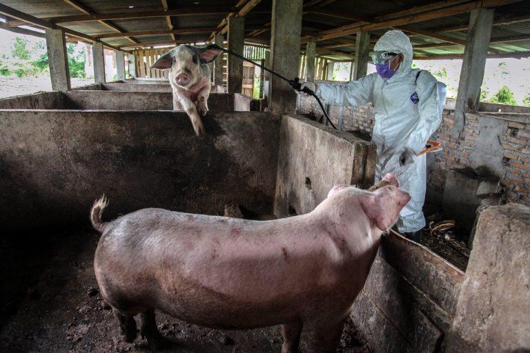 """Na China, um novo vírus da gripe com """"potencial pandêmico"""" foi encontrado"""