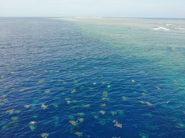 Imagem de colônia de 64 mil tartarugas marinhas é capturada por drone