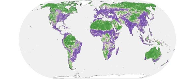 Metade da terra do nosso planeta ainda pode ser salva dos danos humanos, aponta estudo