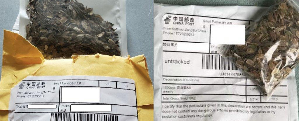 Pacotes misteriosos com sementes chinesas estão aparecendo por todo Estados Unidos h