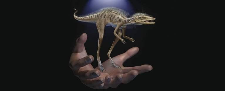 Ancestral de dinossauro extremamente pequeno é descoberto em Madagascar
