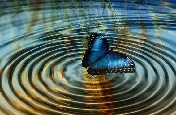 Simulação de viagem no tempo mostra que 'efeito borboleta' quântico não existe