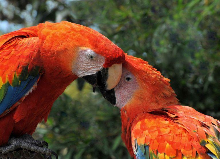 Por que alguns animais são monogâmicos e outros não?