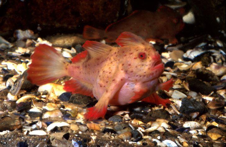 7 animais marinhos tão bizarros que nem parecem desse planeta