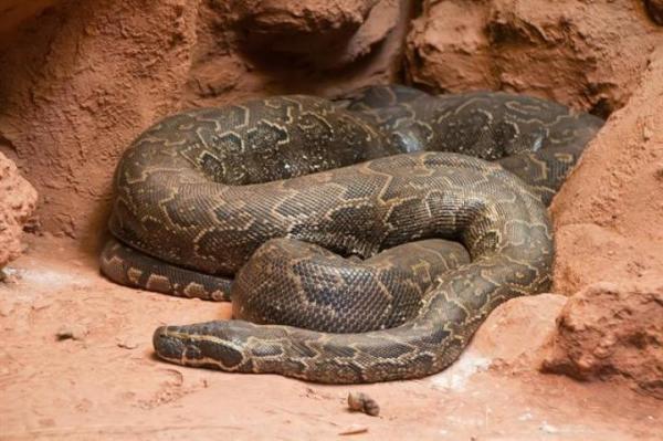 Cobras 4 600x399, Fatos Desconhecidos