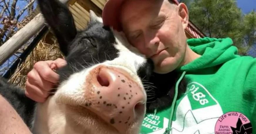 Vaquinha que não produz leite é adotada e emociona a internet