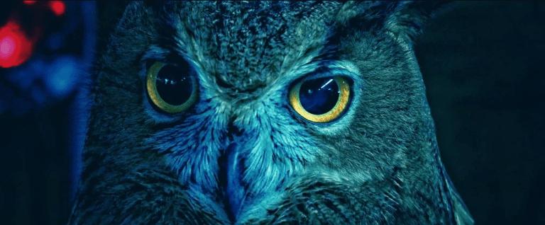 DNA espacial nos olhos das corujas pode ser uma lente que carrega a visão noturna