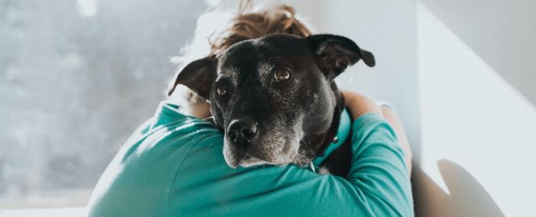 Estudos mostram que os animais podem ser como um curativo para a saúde mental durante o isolamento