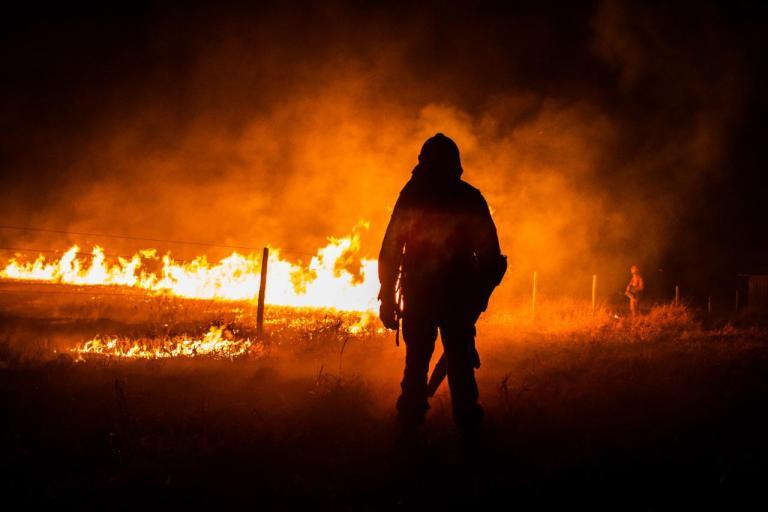 Jovem se mudou para o Pantanal e lidera resgate de animais vítimas dos incêndios