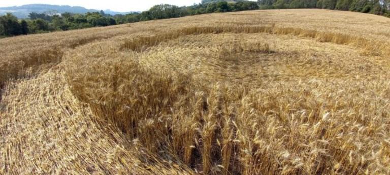 Marcas misteriosas nas plantações de trigo em Santa Catarina assustam moradores