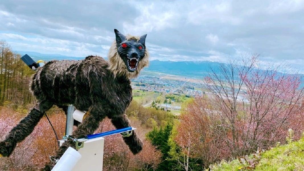 Cidade no Japão instala lobos robôs para espantar ursos