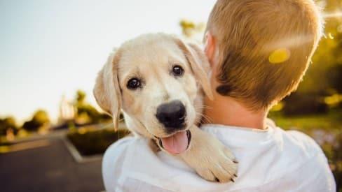 Como a adoção de animais de estimação influencia o mercado?